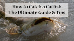​How to Catch a Catfish: The Ultimate Guide & Tips